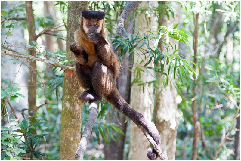 Monkeyland Primate Sanctuary, Plettenberg Bay, South Africa