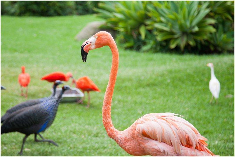 Birds of Eden Free Flight Sanctuary, Plettenberg Bay, South Africa