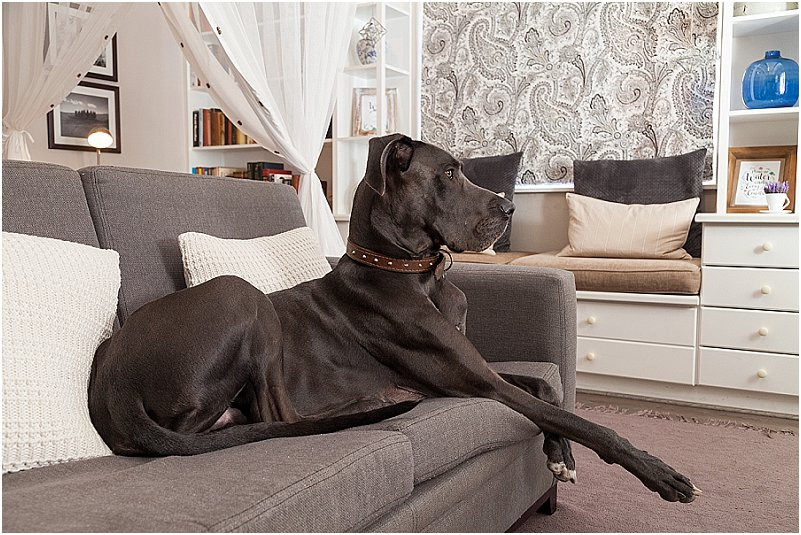 pet friendly accommodation greyton