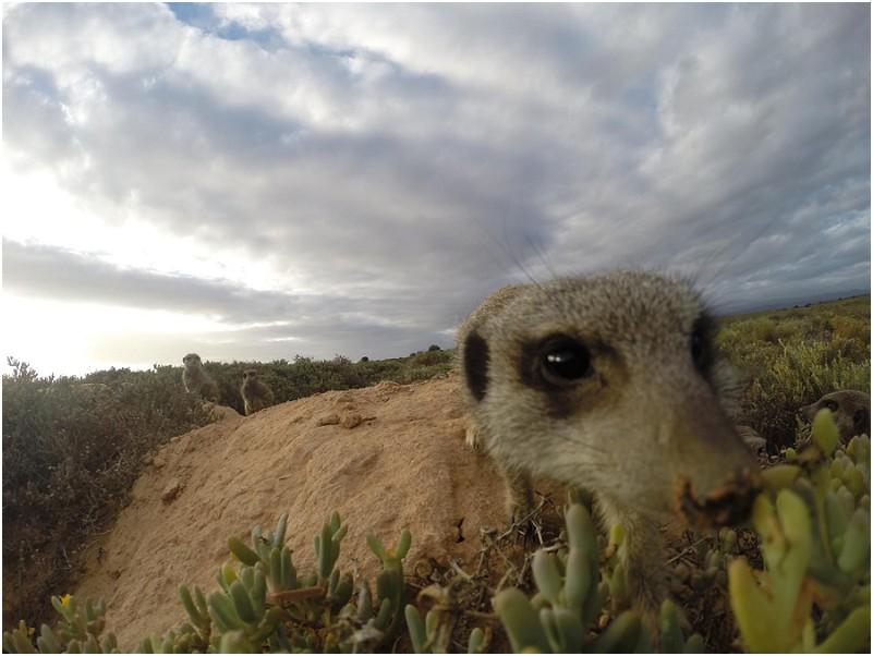 de zeekoe guest farm meerkat tour